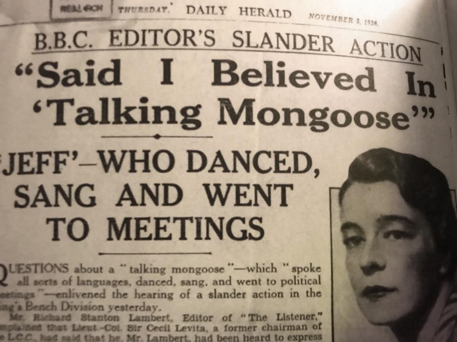 "Contemporary press coverage of the ""talking"" mongoose."